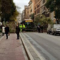 Maltempo nel Lazio, alberi e rami caduti a Roma e in provincia