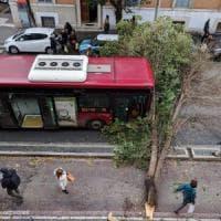 Maltempo Roma, albero cade davanti a un bus in Prati. Mimosa crolla davanti