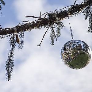 """Roma, il caso """"Spelacchio"""": lo spoglio albero di Natale di piazza Venezia tra polemiche e sfottò"""