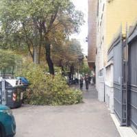 Roma, ramo si spezza in viale Trastevere