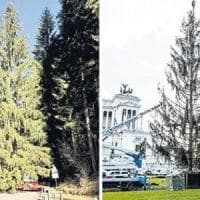 Addio 'spelacchio', il Comune ammette: l'albero di Natale è ufficialmente