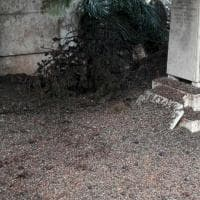 Roma, Verano invaso dal guano. Un cittadino: