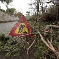 Roma, in via di Ponte Salario 120 fusti abbattuti nel giro di dieci giorni