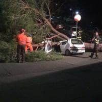 Roma,  un altro pino crolla a Mostacciano e distrugge tre auto in sosta