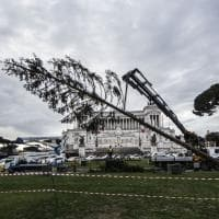 Roma, addio a Spelacchio: via le decorazioni, tagliati rami e tronco