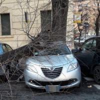 Roma, vento fa crollare alberi: feriti due automobilisti. Si stacca tegola