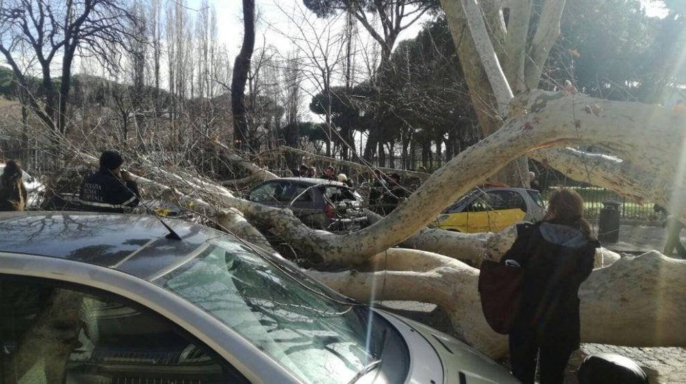 Roma, forte vento fa crollare alberi a Prati e all'Aventino: danneggiate alcune auto