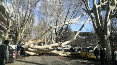 Vento fa crollare alberi: due feriti    foto    Virgilio, vola tegola da tetto: colpita 15enne