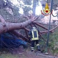 Roma, pino cade su auto in un cortile condominiale: nessun ferito