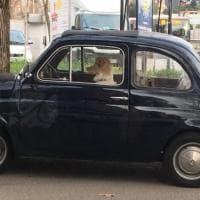 Roma, il cane chauffeur che vuole guidare la Cinquecento