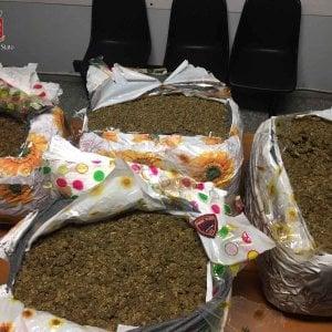 Roma, tentano di spedire 75 kg di marijuana a Londra, arrestati