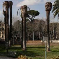 Roma, Villa Torlonia: 29 palme saranno abbattute