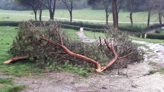 Roma, Villa Ada chiusa invece si entra con il rischio caduta alberi