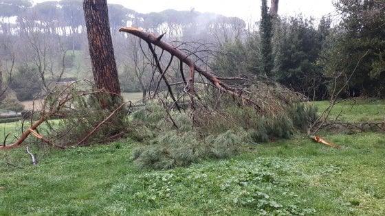 """Roma, nei parchi ancora """"chiusi per neve"""": tra rami e tronchi transennati"""
