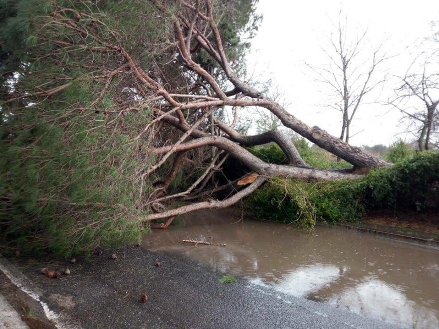 Maltempo a Roma, crolla pino di 25 metri all'Infernetto