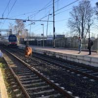 C'è un cavallo sui binari ad Anzio: treni fermi e ritardi