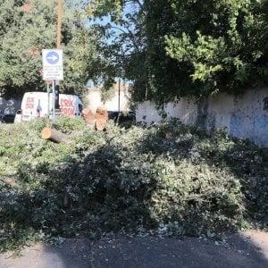 """Roma, Montanari: """"Nuovi alberi stradali per compensare quelli abbattuti"""""""