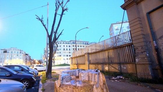 Verde a Roma, abbattuti 450 alberi malati ma i nuovi saranno alti solo tre metri