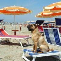 Roma, a Ostia arriva la spiaggia per cani Bau Beach