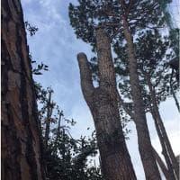 Flaminio, quei pini abbattuti accanto Villa Poniatowski in stato di abbandono. La denuncia di una lettrice