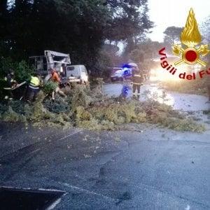 Roma, cade un pino sulla via Casilina, i vigili ne abbattono altri tre