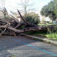 Roma, cade un albero al Villaggio Olimpico: