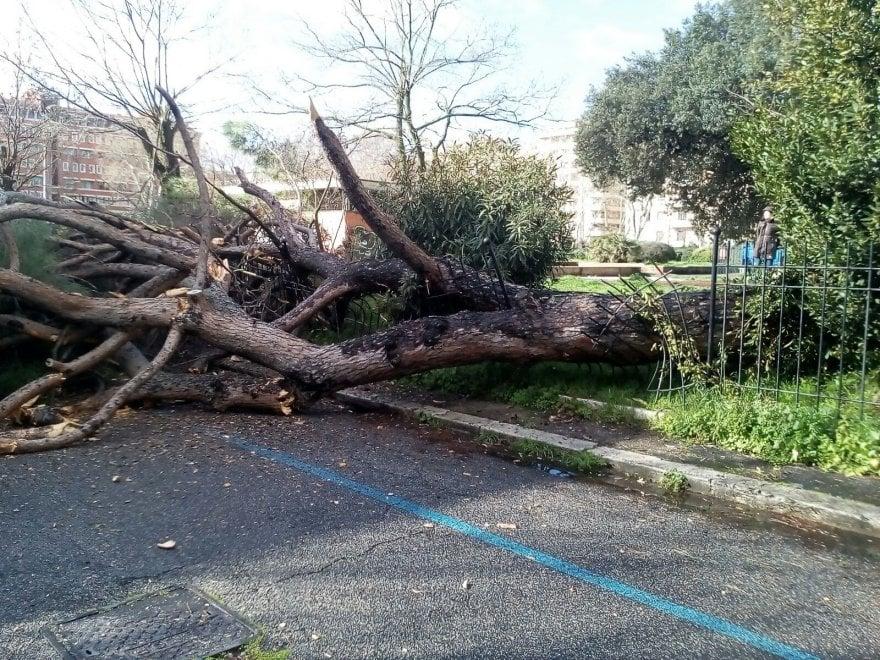 """Roma, cade un albero al Villaggio Olimpico: """"Viviamo nel terrore degli schianti"""""""