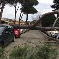 Roma, pino di tre metri si schianta sulle auto in sosta