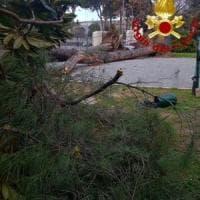 Guidonia, cade albero alto 20 metri: ferita una donna