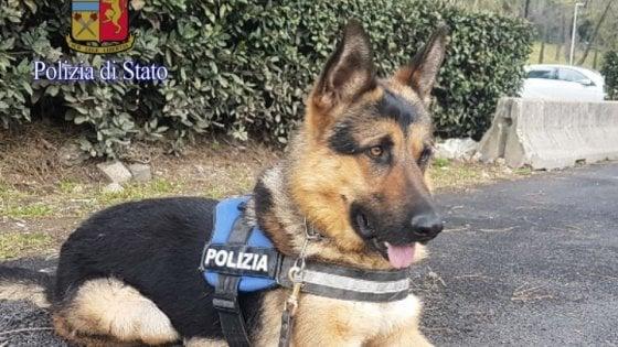 Roma Ares Da Vagabondo Senza Casa A Cane Poliziotto Repubblicait