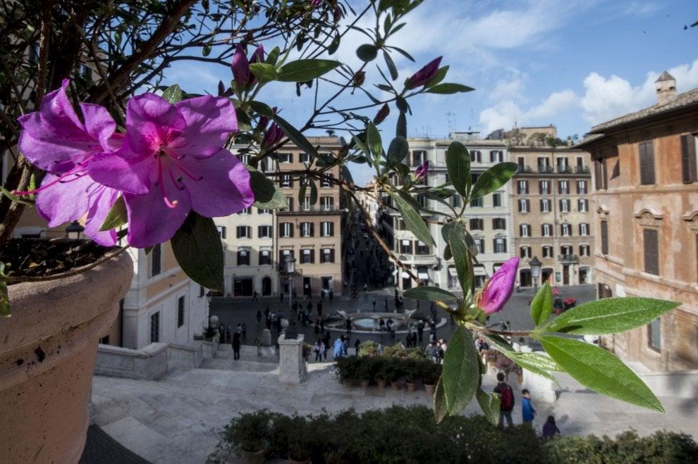 Roma, tornano a fiorire le azalee a Trinità dei Monti