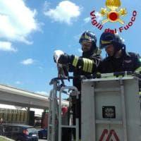 Roma, gabbiano incastrato sul palo della luce: pompieri lo salvano