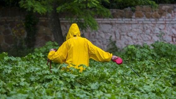 Roma, parchi e giardini invasi dall'erba alta: inviateci le vostre foto
