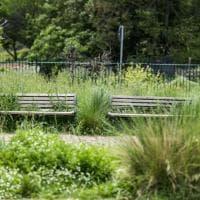 Roma, verde senza manutenzione: così parchi e giardini diventano una giungla