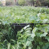 Roma, verde senza manutenzione: la giungla dell'erba alta. Le foto dei lettori/1