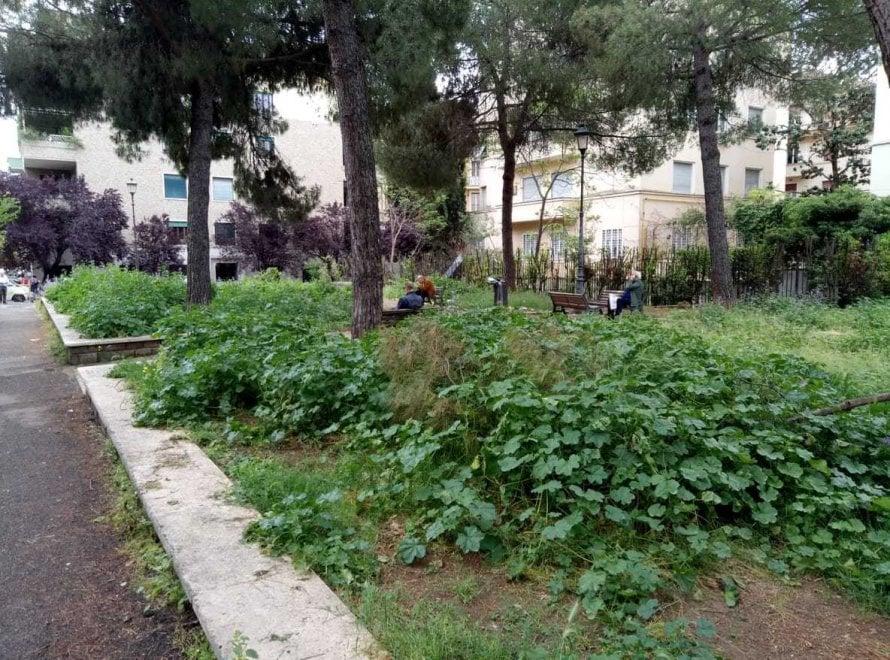 Roma, verde senza manutenzione: la giungla dellerba alta. Le foto ...