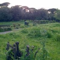Roma, verde senza manutenzione: la giungla dell'erba alta. Le foto dei lettori/3