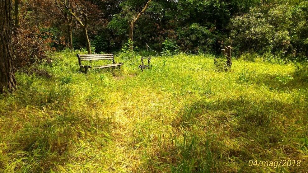 Roma, verde senza manutenzione: la giungla dell'erba alta. Le foto dei lettori/4