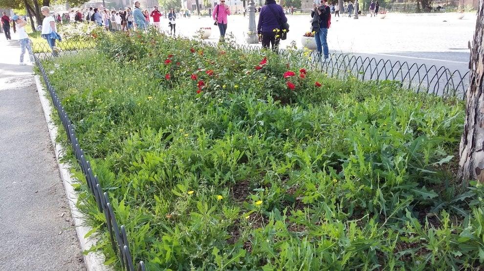Roma, verde senza manutenzione: la giungla dell'erba alta. Le foto dei lettori/5