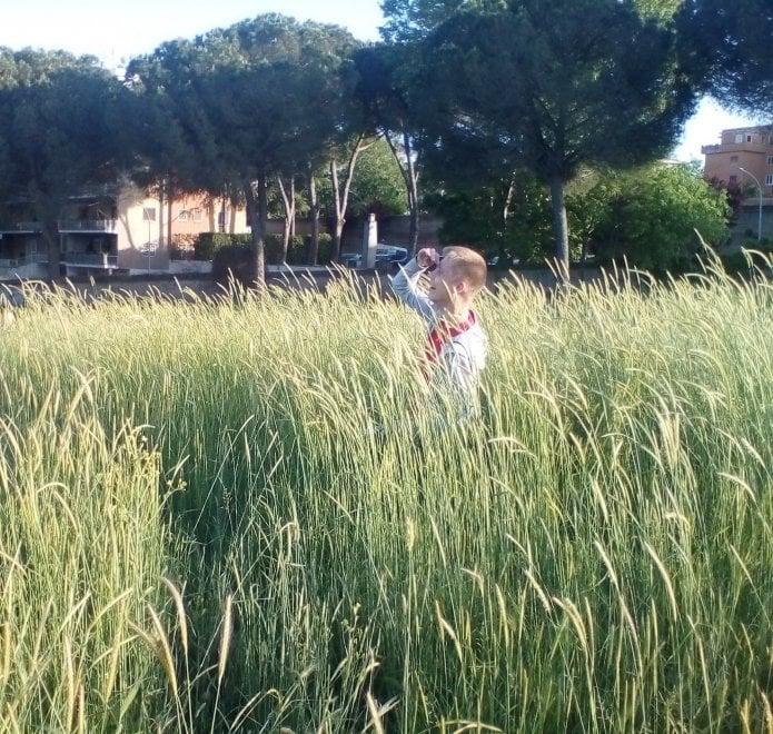 Roma, verde senza manutenzione: la giungla dell'erba alta. Le foto dei lettori/6