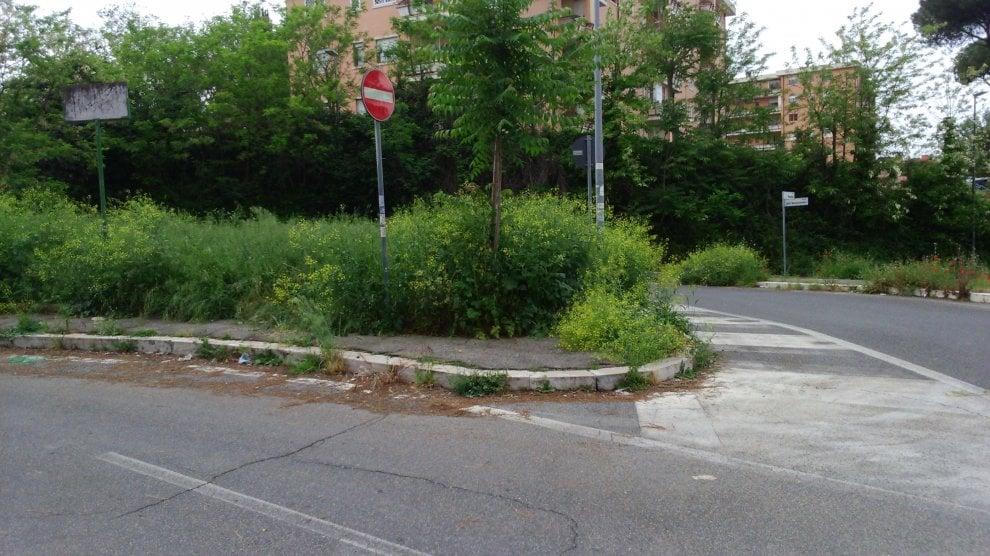 Roma, verde senza manutenzione: la giungla dell'erba alta. Le foto dei lettori/7
