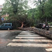 Roma, cade pino di 20 metri all'Eur