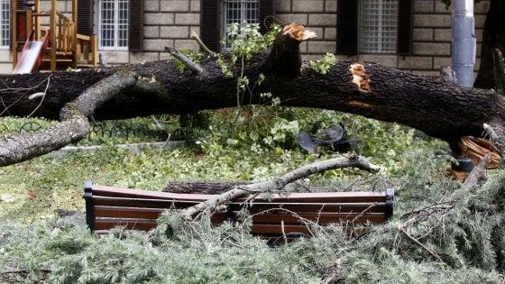 Roma, crolla albero di 20 metri in via Volturno: nessun ferito