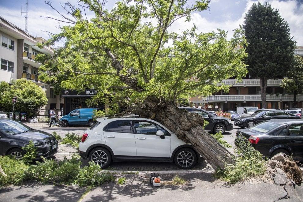 Roma, un albero crolla su auto in sosta  in via della Tecnica all'Eur