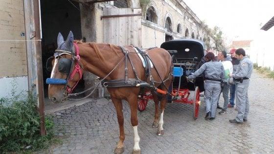 """Roma, botticelle via dal centro ma solo in 4 parchi. Vetturini: """"Impugneremo provvedimento"""""""