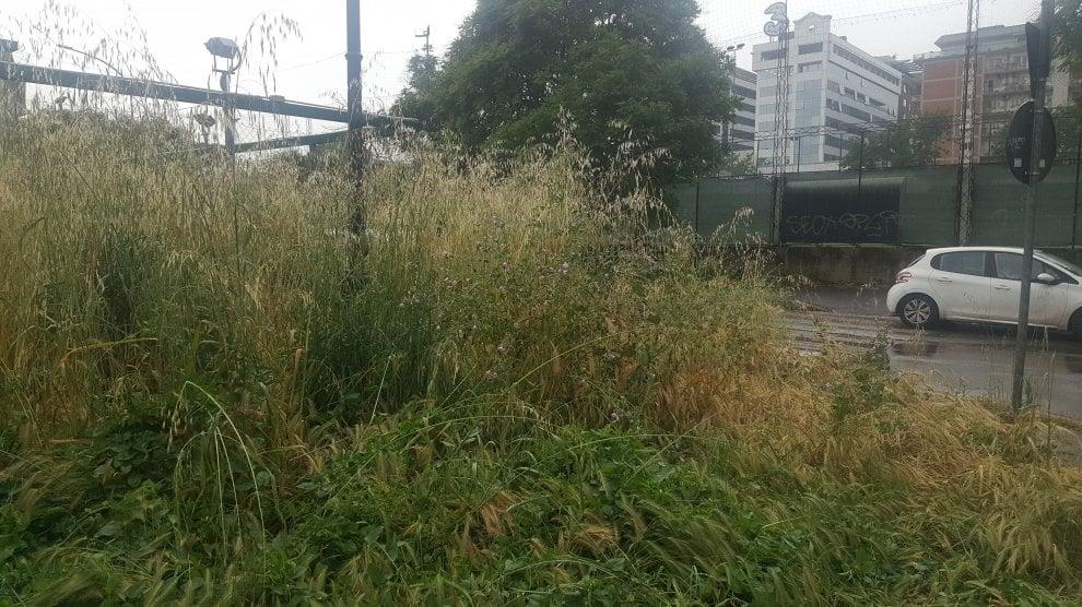 Roma, verde senza manutenzione: la giungla dell'erba alta. Le foto dei lettori/8