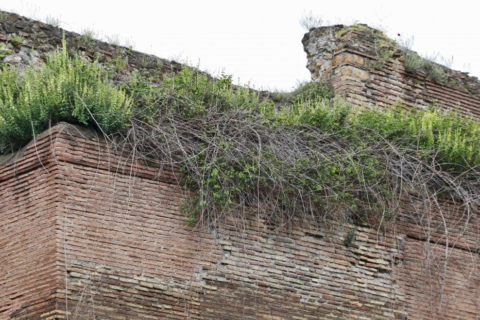 Roma, rovi e cespugli: il degrado aggredisce anche le Mura aureliane