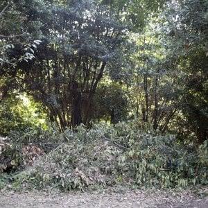 Roma, da Villa Ada al centro il verde invivibile senza manutenzione