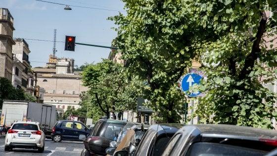 Roma,  l'ultimo effetto giungla: rami incolti sulla segnaletica