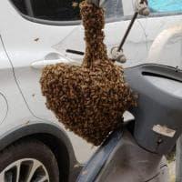 Le api colonizzano un motorino: paura in piazza Ragusa a Roma